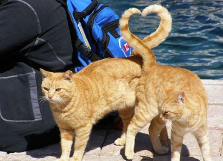 cat-pictures-taken-right-time-6