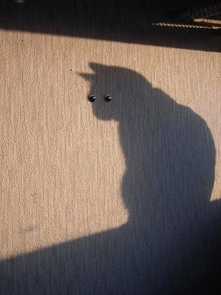 perfectly-timed-cat-photos-fun