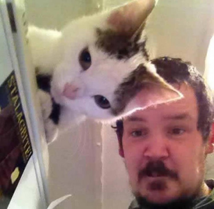 perfectly-timed-cat-photos-funny-2