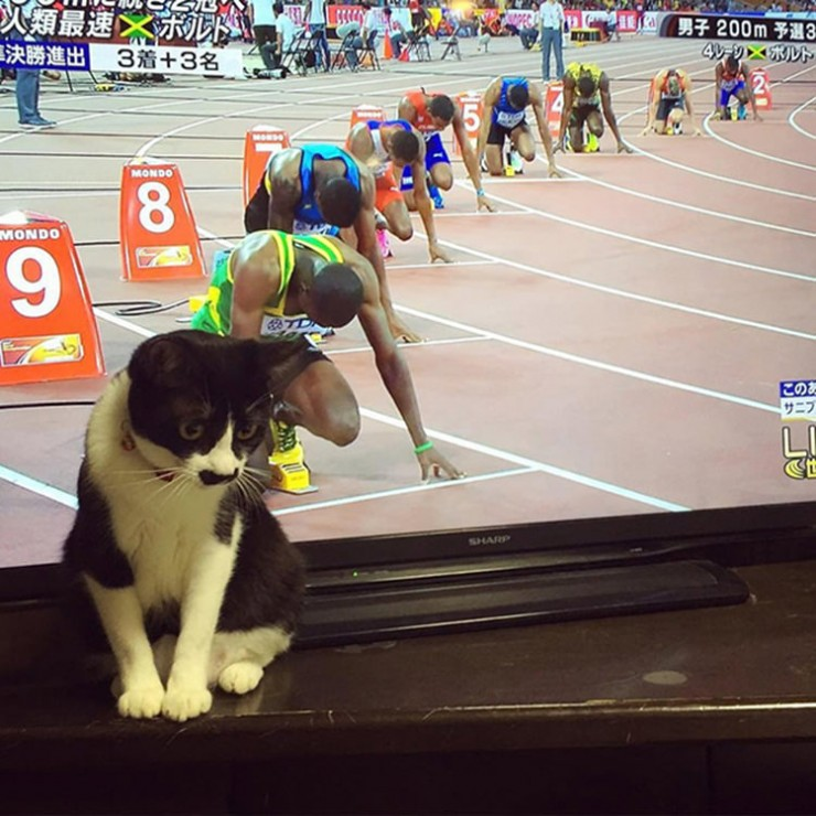 perfectly-timed-cat-photos-funny-4