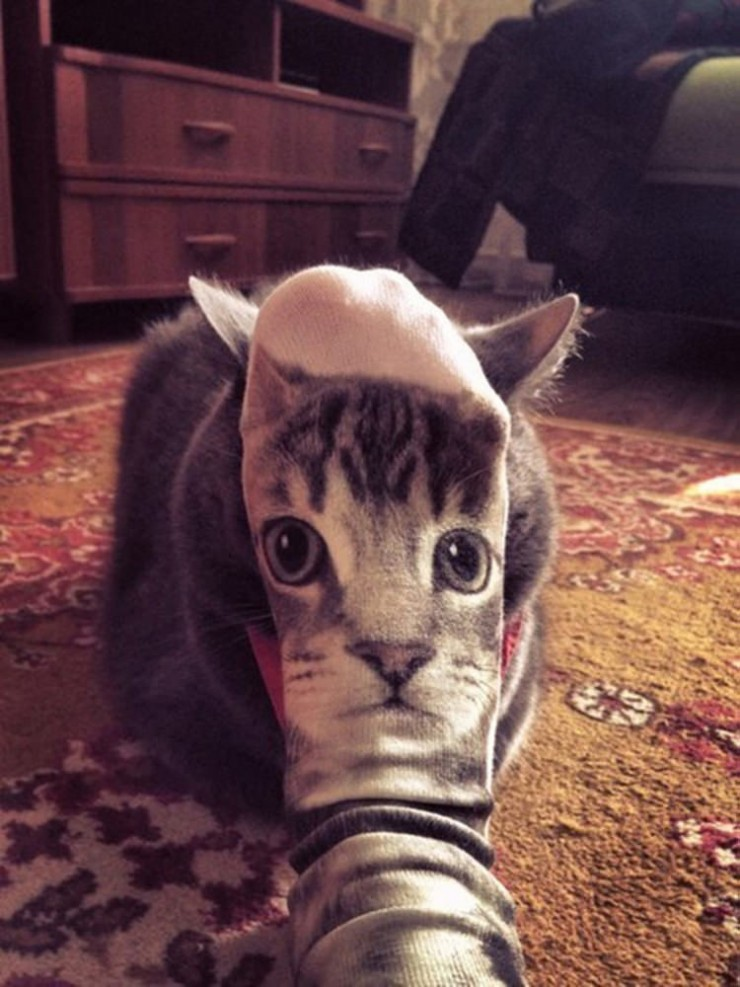 perfectly-timed-cat-photos-funny-6
