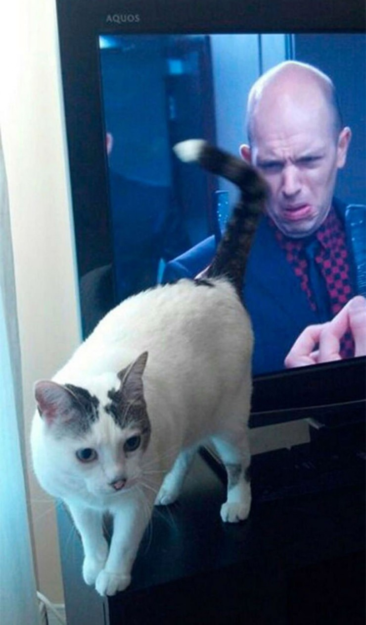 perfectly-timed-cat-photos-funny-8