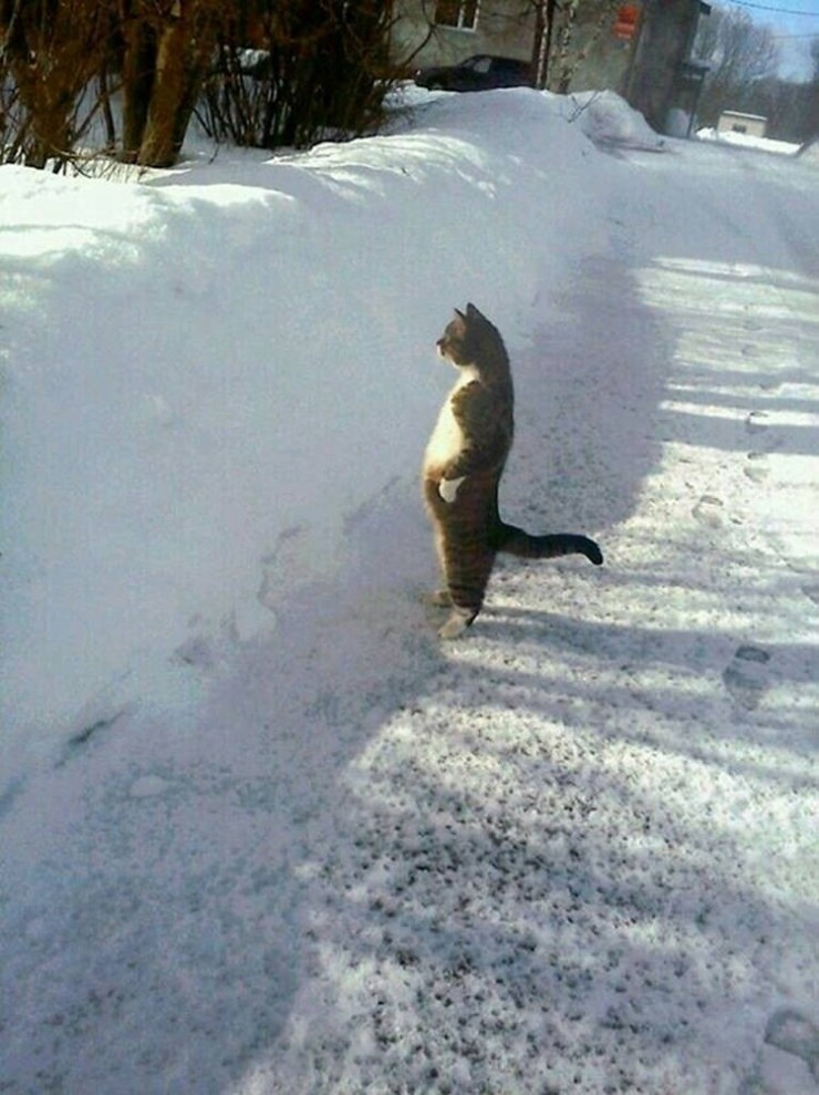 perfectly-timed-funny-cat-p