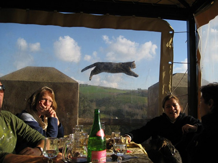 perfectly-timed-funny-cat-pictures-10
