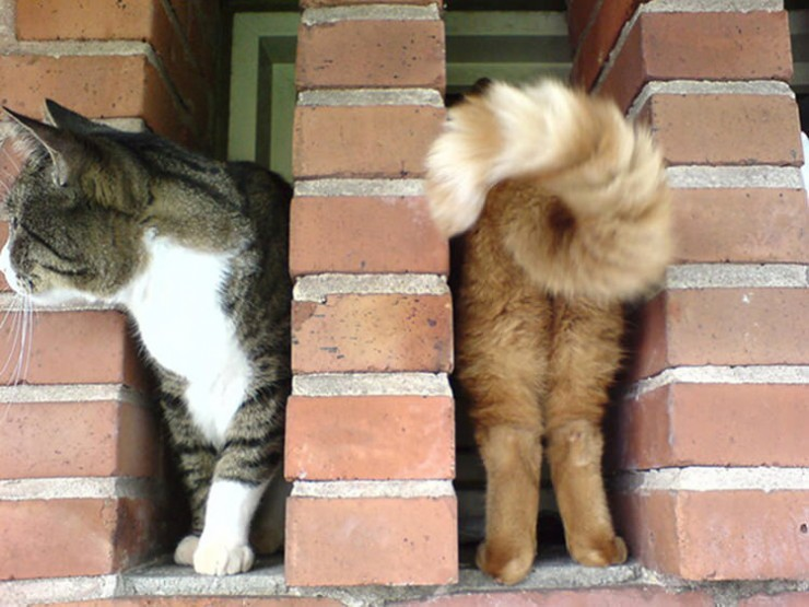perfectly-timed-funny-cat-pictures-7