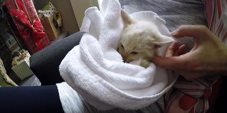 kittey