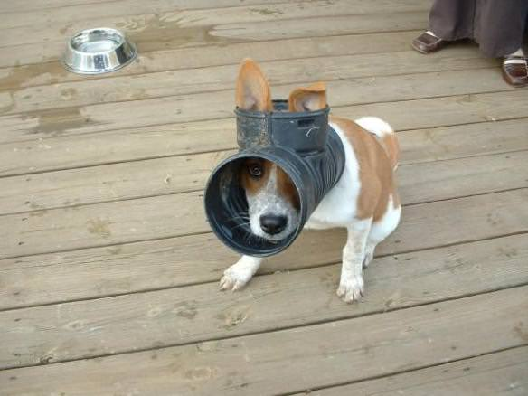Dog-with-its-head-stuck-in-a-drain-pipe