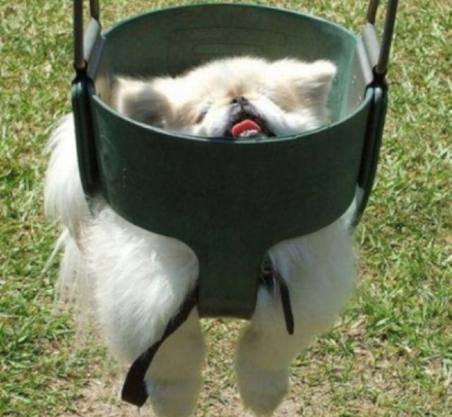 Dogs-stuck-in-various-things1