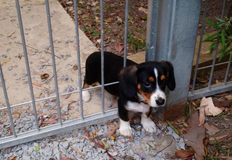 Stuck-puppy