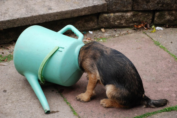 The-World's-Top-10-Best-Images-of-Dogs-with-Their-Heads-Stuck