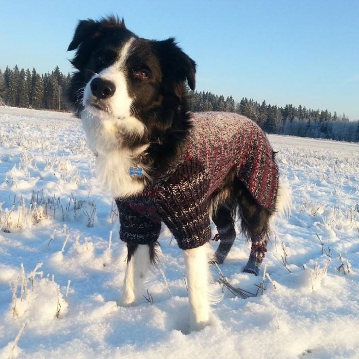 Dogs Dressed Up In Snow Clothes 01.