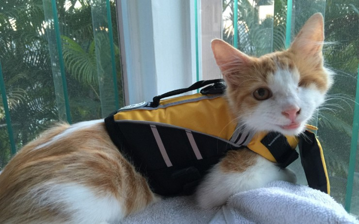 Kuli One Eyed Surfing Cat 03.