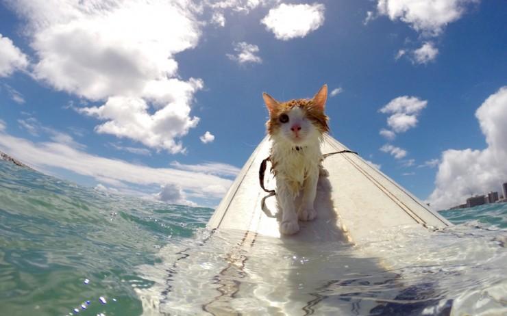 Kuli One Eyed Surfing Cat 02.