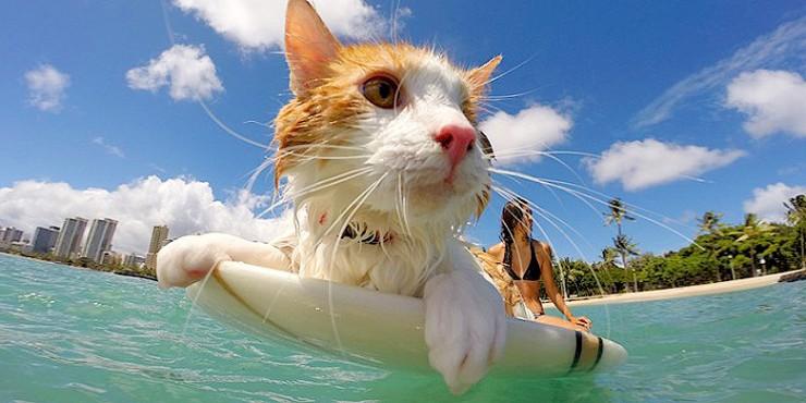 Kuli One Eyed Surfing Cat.