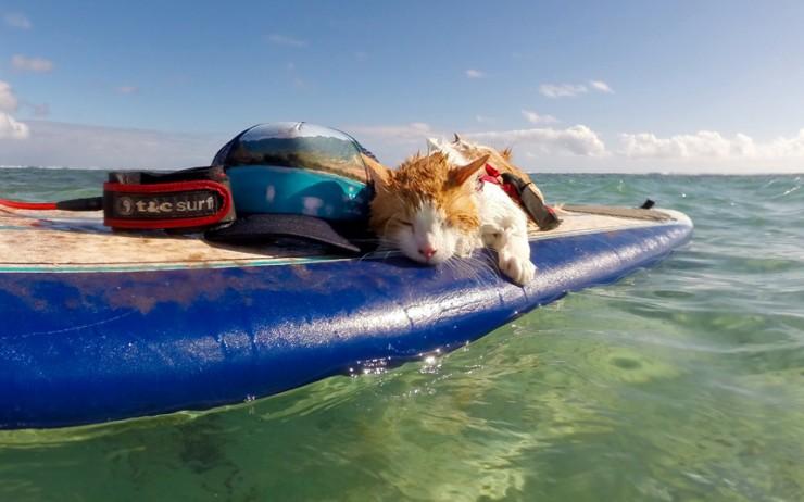 Kuli One Eyed Surfing Cat 05.