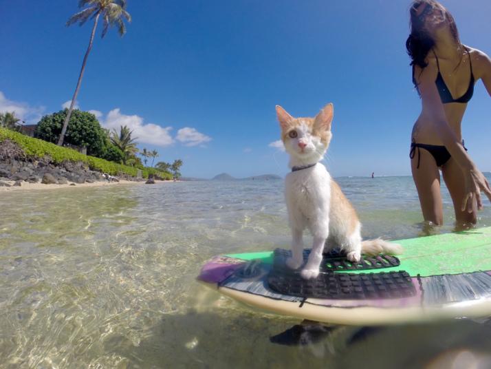 hawaii surfing 02.