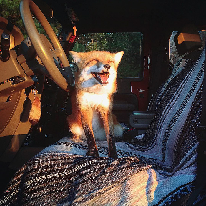 juniper-fox-happiest-instagram-11