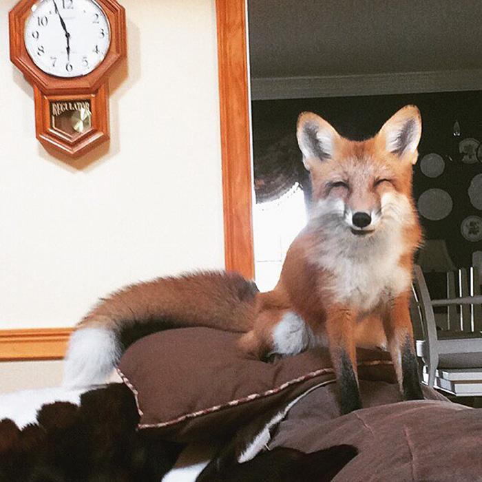 juniper-fox-happiest-instagram-12