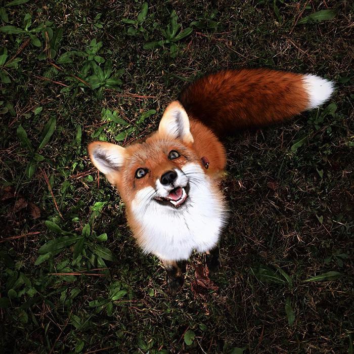 juniper-fox-happiest-instagram-9