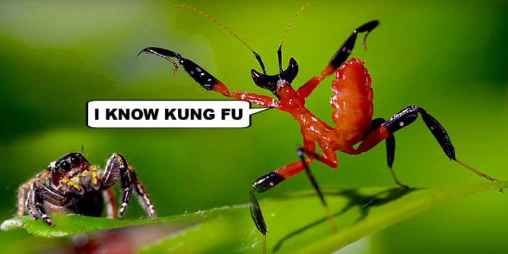 Kung-Fu-Mantis