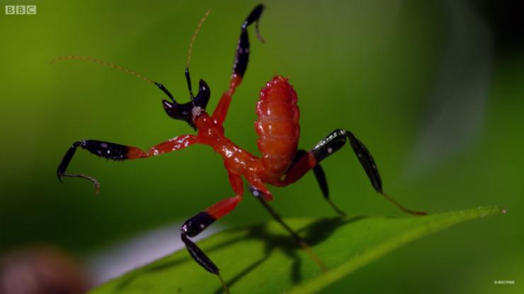 Kung-Fu-Mantis-vs-Jumping-Spider