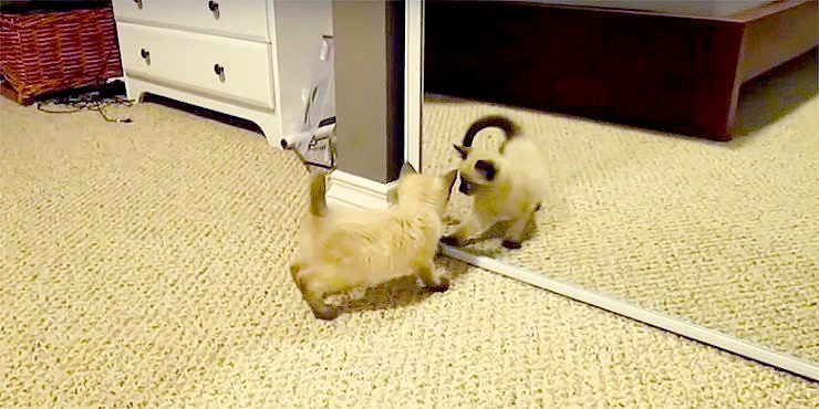 cat looking in a mirror - 99.