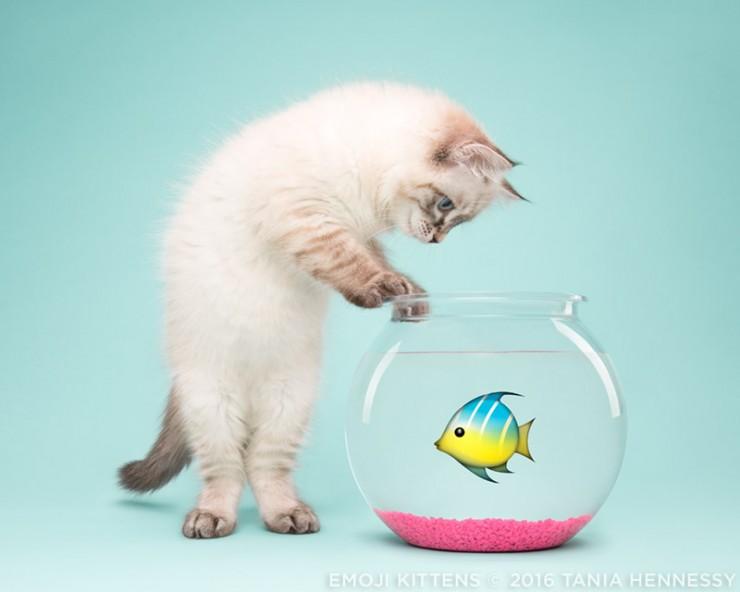 Emoji_Kittens_Tania_Hennessy_fish__2016_Tania_Hennessy