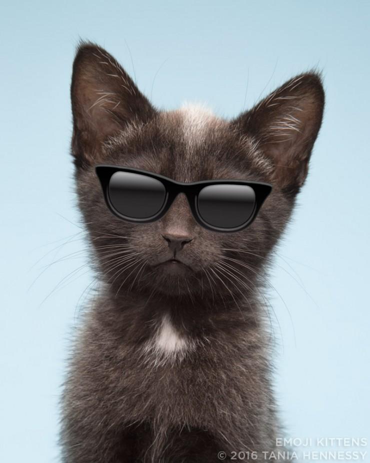 Emoji_Kittens_Tania_Hennessy_sunglasses__2016_Tania_Hennessy