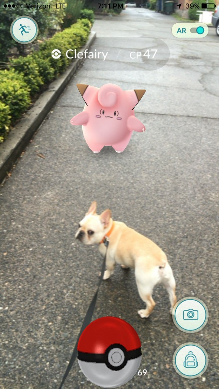 clefairy-caught-on-dog-walk-french-bulldod-pokemon-go