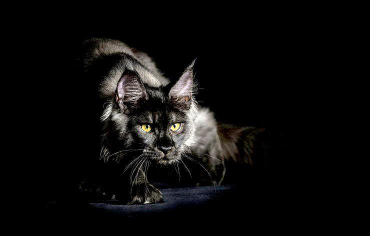 ask-a-cat-behaviourist-740x472