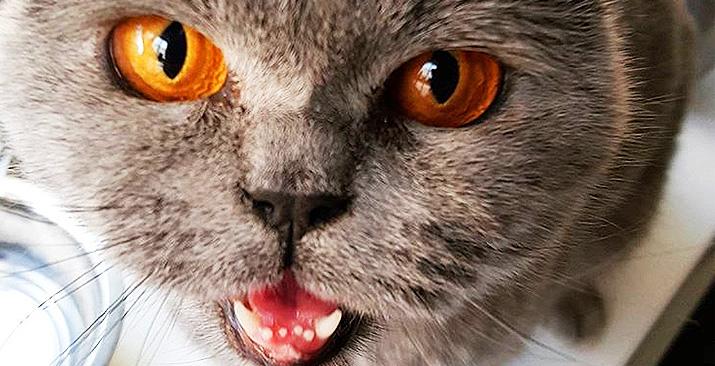 pumpkin the shelter cat.