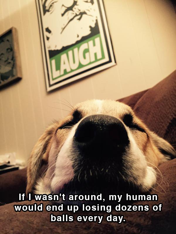Dog Shower Thoughts 02.