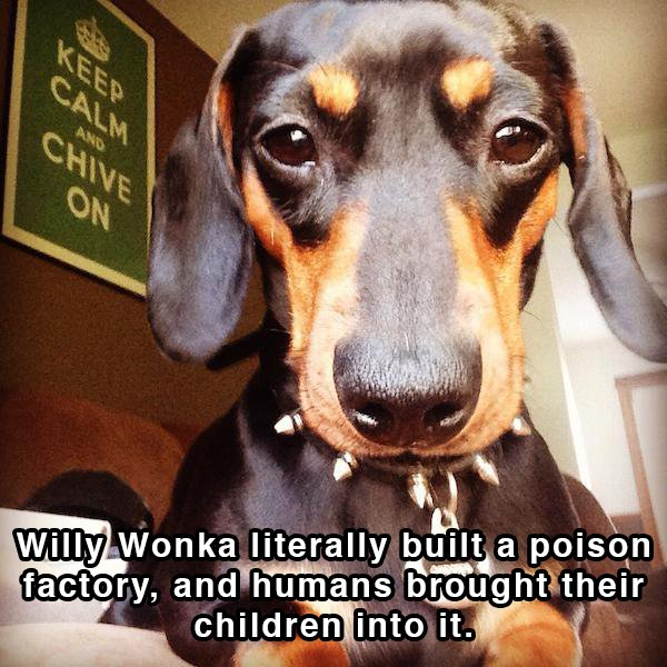 Dog Shower Thoughts 04.