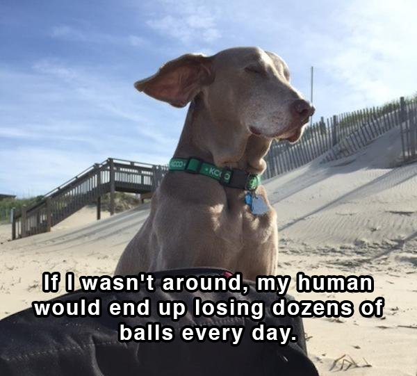 Dog Shower Thoughts 06.
