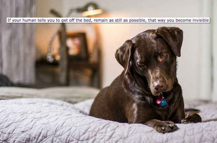 dog thoughts funny 10.