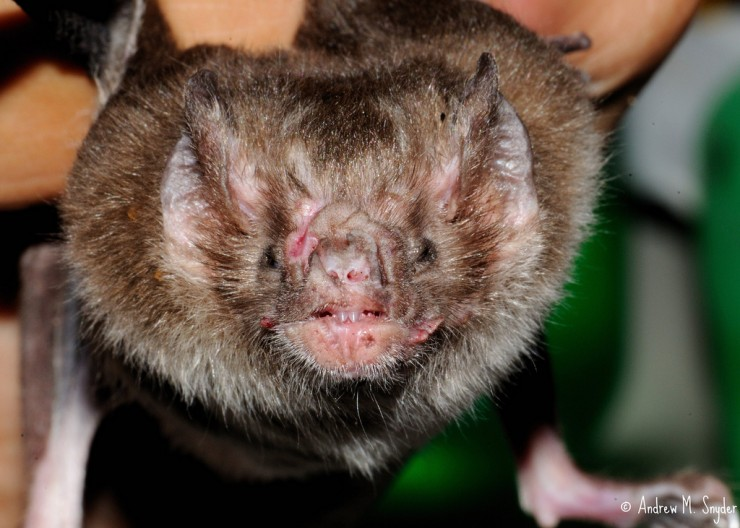 Vampire Bats In Brazil Have Started To Feed On Human Blood, Scientists Find-2