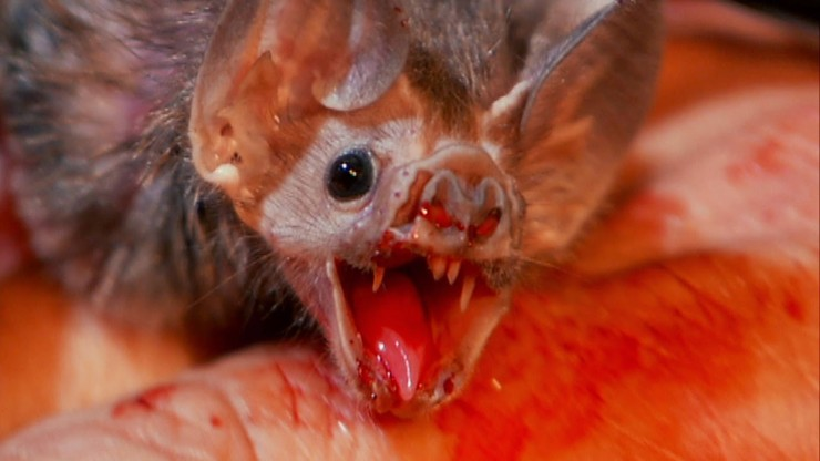 Vampire Bats In Brazil Have Started To Feed On Human Blood, Scientists Find-3