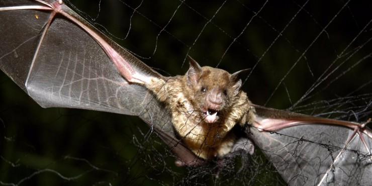 Vampire Bats In Brazil Have Started To Feed On Human Blood, Scientists Find