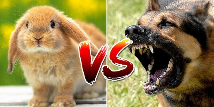 Ozzy Man Reviews: Bunny vs Dogs - 02.