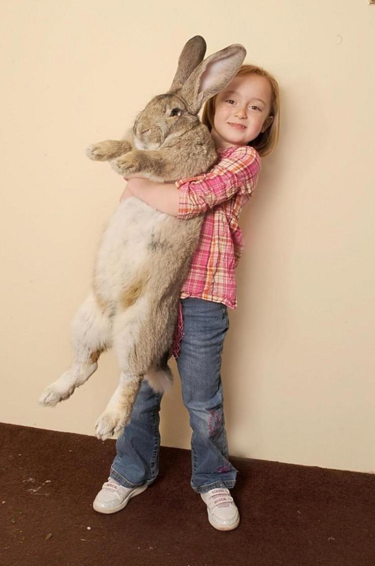 giant animals 04.