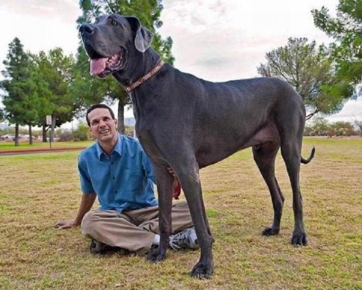 giant animals 06.