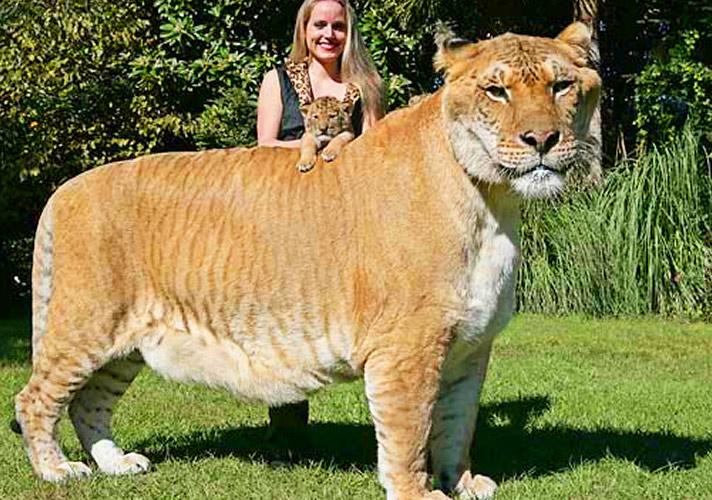 giant animals 07