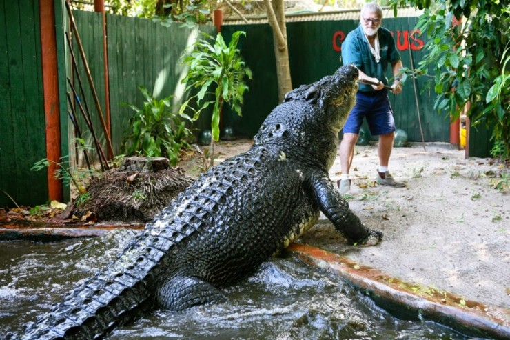 giant animals 11.