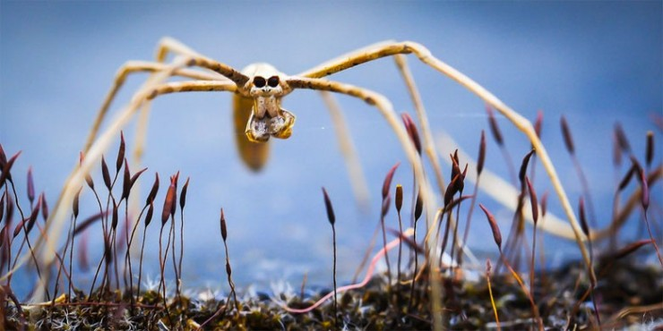 NOPE Spider Terrifying Arachnids 01.