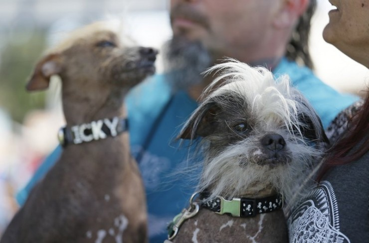 Worlds Ugliest Dog Contest 04.