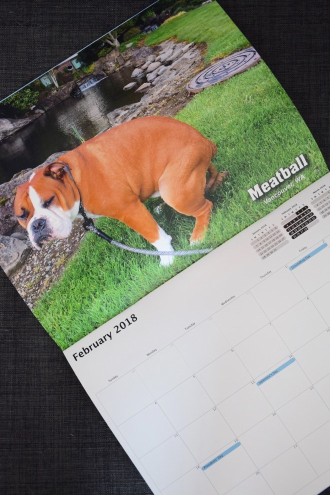 Pooping Pooches 2018 Dogs Pooping Calendar 06.
