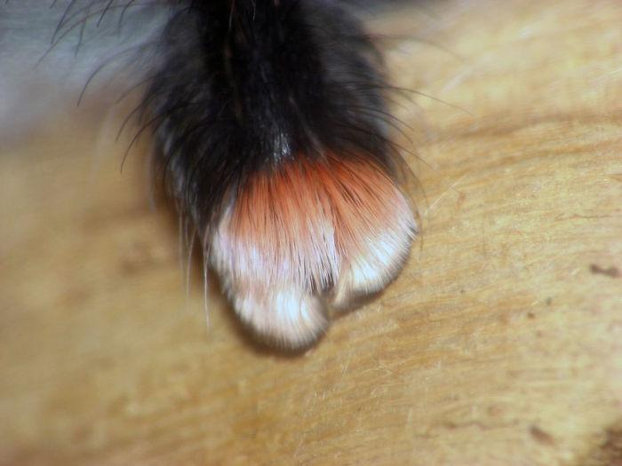cute spider paws 02.