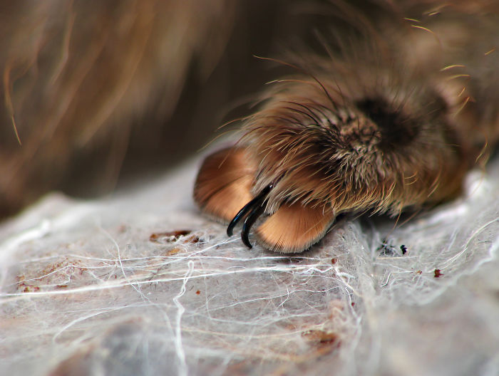 cute spider paws 05.